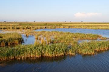 Excursiones guiadas por el Delta del Ebro
