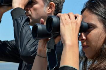 Safari de observación y fotografía de aves acuáticas en el Delta del Ebro