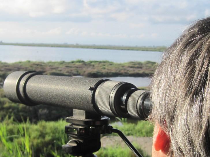 Excursion guiada de observación de aves por el Delta del Ebro