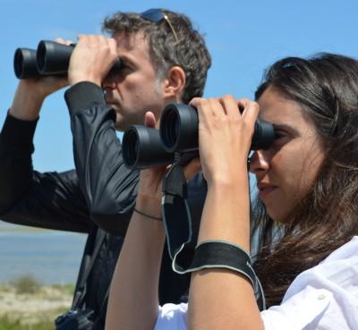 Safari fotográfico de observación de aves en el Delta del Ebro
