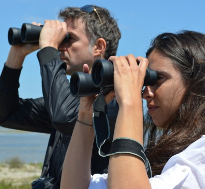 Photo safari bird watching in the Delta del Ebro